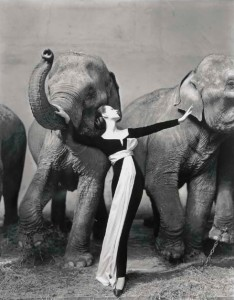 RICHARD AVEDON (1923-2004) DOVIMA WITH ELEPHANTS, EVENING DRESS BY DIOR, CIRQUE D'HIVER, PARIS, 1955  Lot 249 Price Realized   $341,000 Set Currency Estimate $300,000 - $500,000